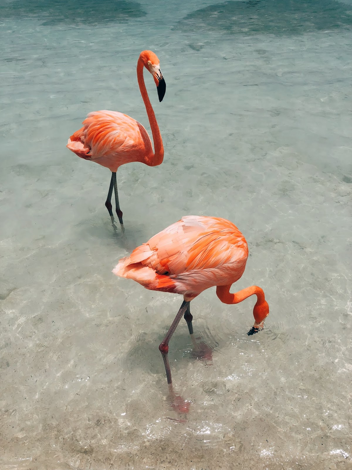 Aruba E Miami Un Viaggio Da Sogno Con Eden Made Pensieri In Viaggio